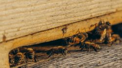 Reasons to gain professional pest control services for your commercial building